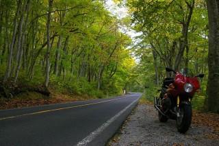 大山スカイライン : ブナが両端に生い茂りキレイでした。もっと紅葉がすすんでいたらなぁ。